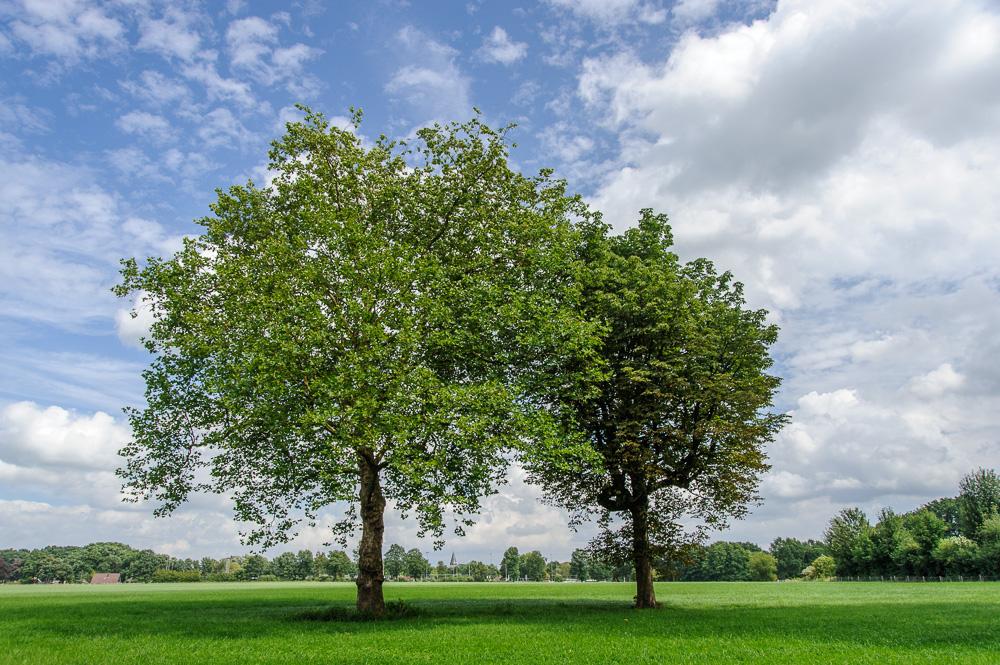 bomen gezicht op Lonneker